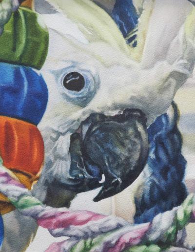 Frank Peeking - Watercolor- 12x16